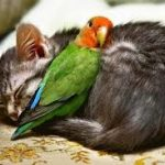 次の日朝早いのに眠れない!!なかなか眠れない人がぐっすり眠る方法